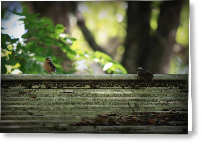 Baby Bird Greeting Cards - Flying Lessons Greeting Card by Mandy Shupp