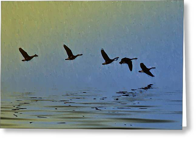 Stream Digital Greeting Cards - Flying Low Greeting Card by Bill Cannon