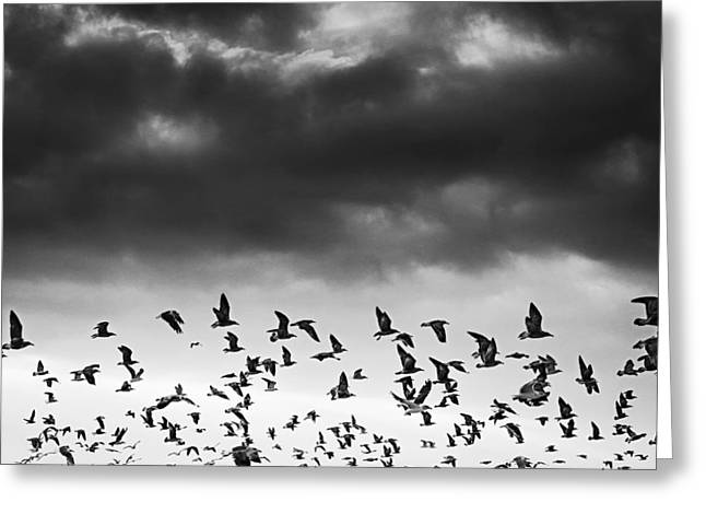 Flying Seagull Greeting Cards - Flying Seagulls Greeting Card by Joao Bizarro