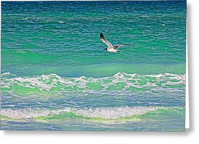 Flying Seagull Greeting Cards - Flying Solo Greeting Card by HH Photography