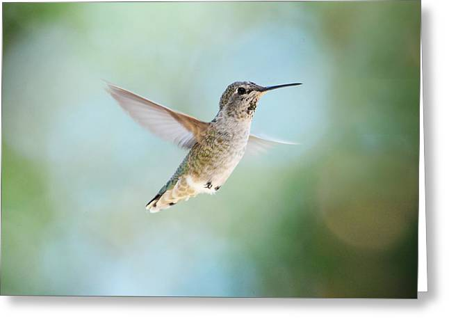 Hovering Greeting Cards - Flying Solo Greeting Card by Lynn Bauer