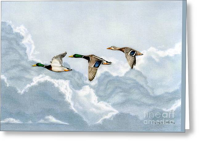 Flying South Greeting Card by Sarah Batalka