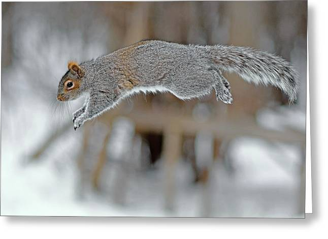 Flying Squirrel Greeting Card by Asbed Iskedjian