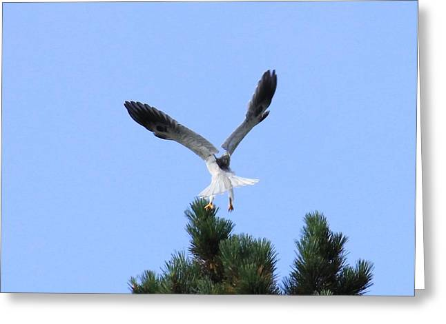 Kite Greeting Cards - Flying V Greeting Card by Michael Fischer