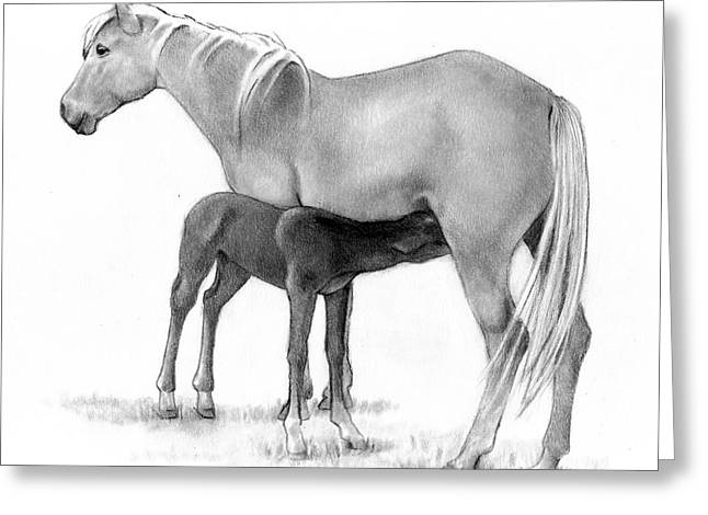 Bonding Drawings Greeting Cards - Foal And Mare In Pencil Greeting Card by Joyce Geleynse