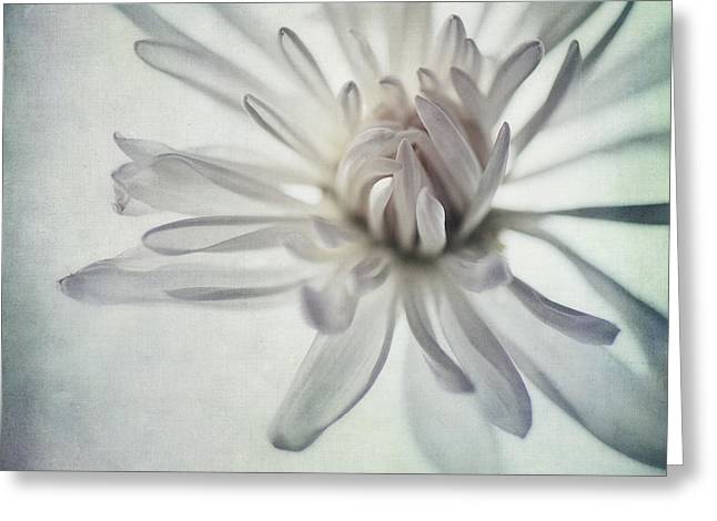 Texture Floral Photographs Greeting Cards - Focus On The Heart Greeting Card by Priska Wettstein