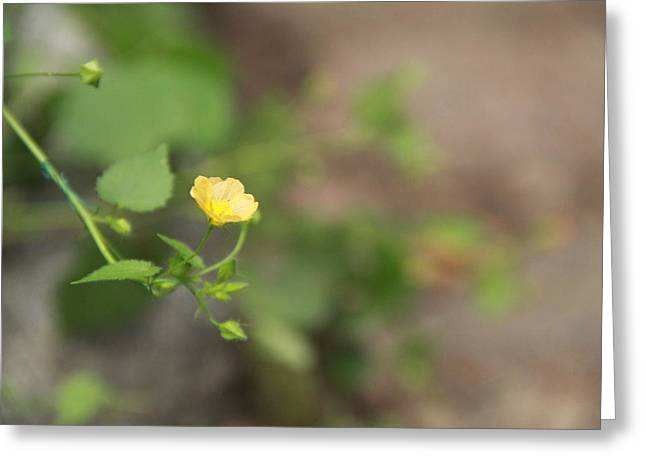 Close Focus Floral Greeting Cards - Focus On Yellow Flowers Greeting Card by Pradip Patel