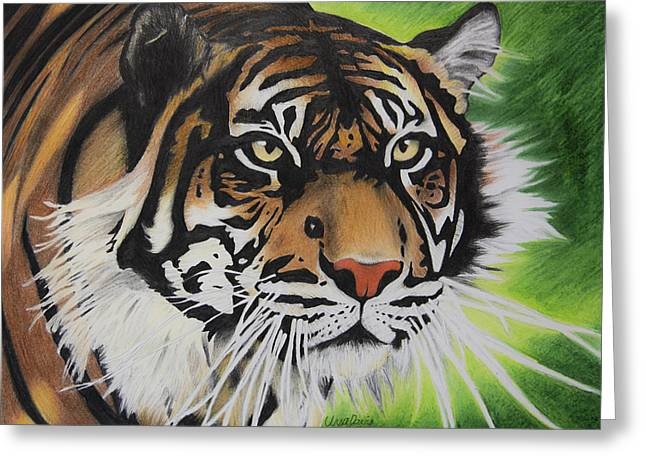 Wild Life Drawings Greeting Cards - Focused Tiger Greeting Card by Ursa Davis