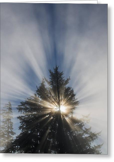 Emergence Greeting Cards - Fog And Sunlight Make A Sunburst Greeting Card by Robert L. Potts