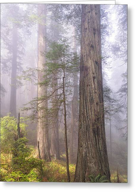 Damnation Greeting Cards - Fog and Tall Trees Greeting Card by Patricia  Davidson