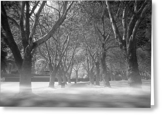 Halloween Greeting Cards - Fog in Stanley Park Greeting Card by Julius Reque