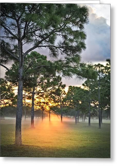 Fog In The Forest Greeting Card by Debra and Dave Vanderlaan