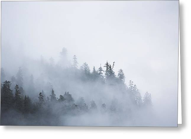 Emergence Greeting Cards - Fog Shrouded Trees Along The British Greeting Card by Robert Postma