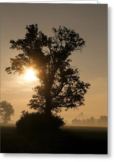 Foggy Country Morning Greeting Card by Dan Sproul