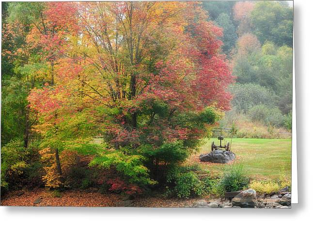 Trees Greeting Cards - Foggy Fall Morning Greeting Card by Bill Wakeley