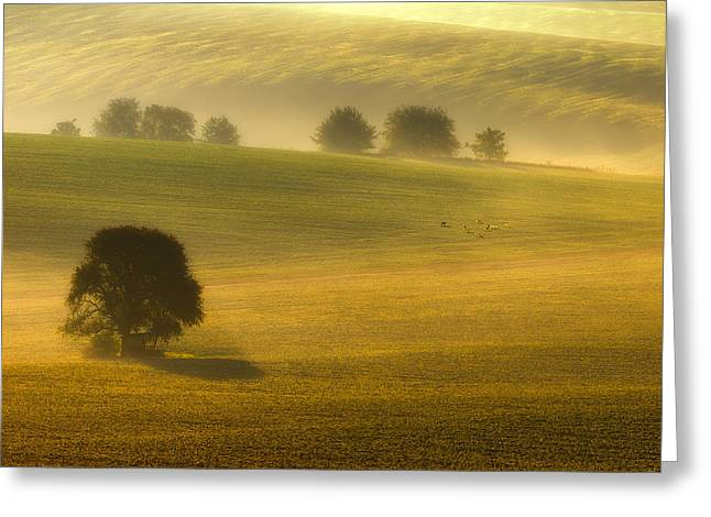 Foggy. Mist Greeting Cards - Foggy Fields Greeting Card by Piotr Krol (bax)