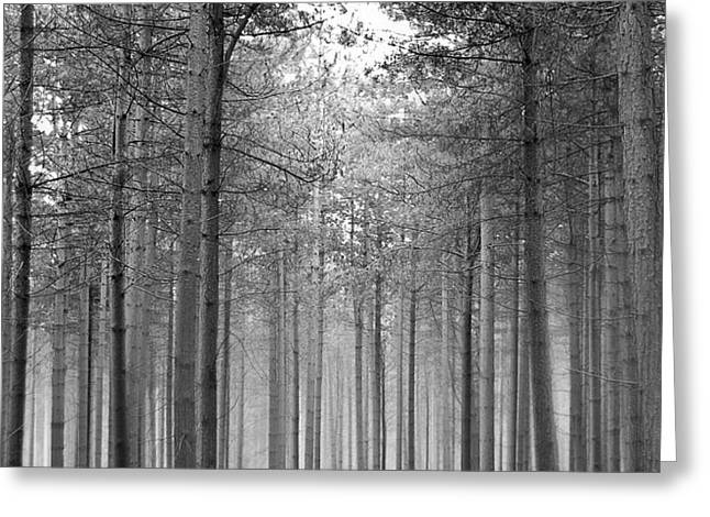 Foggy Forest Greeting Card by Svetlana Sewell