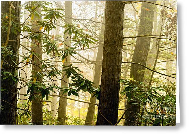 Nicholas Greeting Cards - Foggy Forest Greeting Card by Thomas R Fletcher
