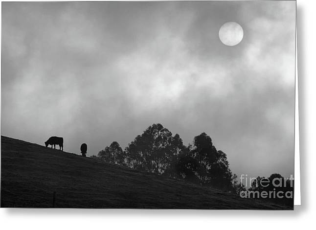 Foggy Grazing Half Moon Bay California Greeting Card by Gus McCrea