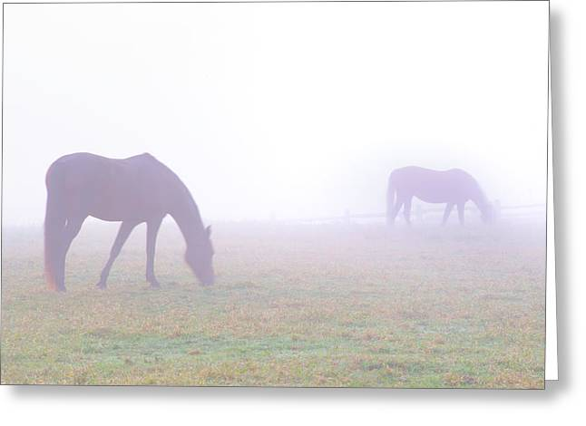 Foggy Horse Farm In Whitemarsh Pa Greeting Card by Bill Cannon