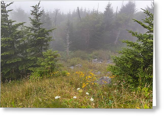 Mccoy Greeting Cards - Foggy Meadow Greeting Card by A Different Brian Photography