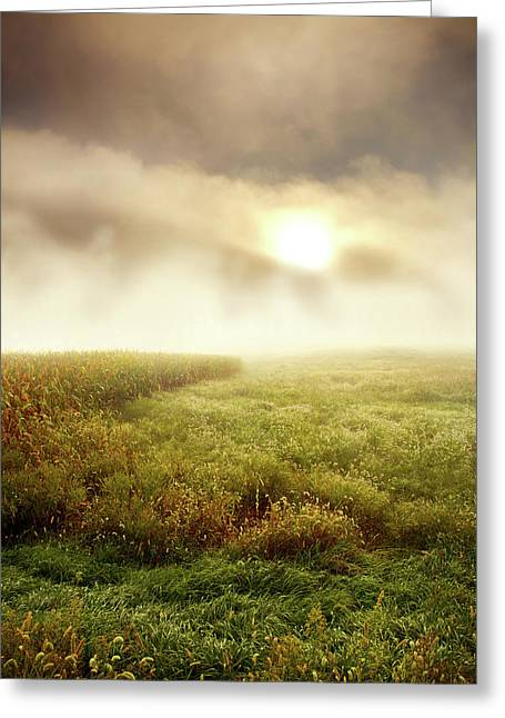 Fog Mist Greeting Cards - Foggy Meadow Greeting Card by Phil Koch