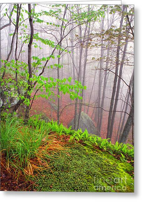 Verdant Greeting Cards - Foggy Misty Spring Morning Greeting Card by Thomas R Fletcher