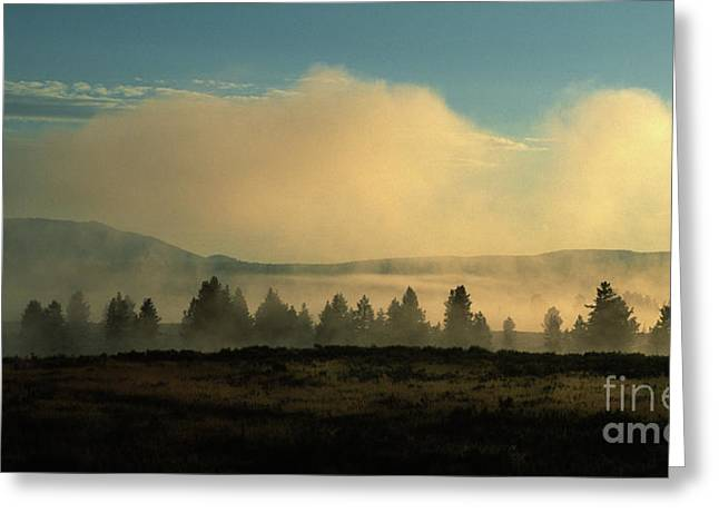 Foggy Morning In Yellowstone Greeting Card by Sandra Bronstein
