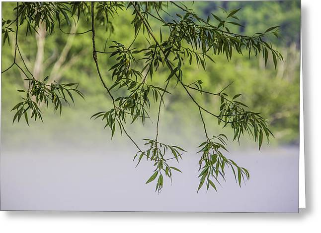 Artist Photographs Greeting Cards - Foggy Morning Tree Greeting Card by Paula Porterfield-Izzo