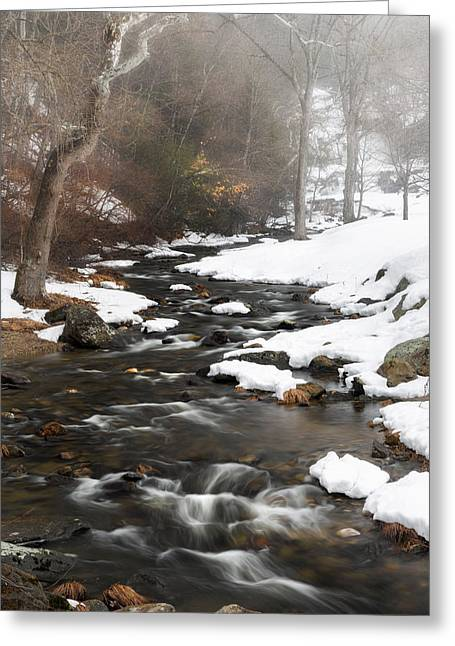 Foggy Day Greeting Cards - Foggy Spring Day Greeting Card by Bill Wakeley