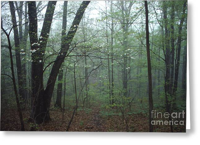 Southern Indiana Photographs Photographs Greeting Cards - Foggy Spring in the Woods Greeting Card by Lowell Anderson