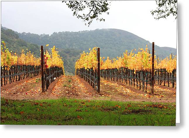 Vineyard Art Greeting Cards - Foggy Vineyard Greeting Card by Art Block Collections