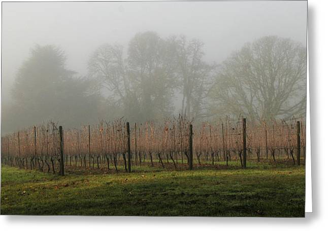 Pinot Noir Greeting Cards - Foggy Vineyard Greeting Card by Jean Noren