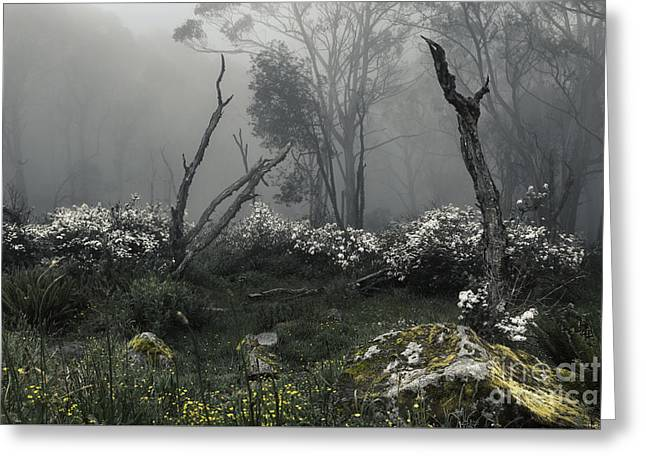 Fogscape Greeting Card by Andrew Paranavitana