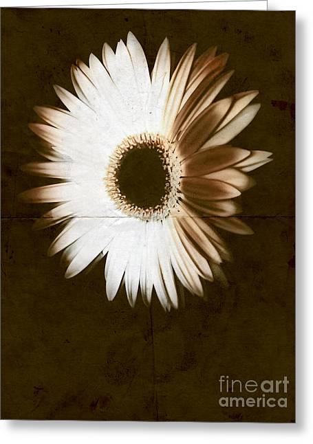 Wedding Salon Greeting Cards - Folded Daisy Greeting Card by Heather Joyce Morrill