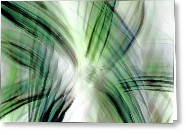 Foliage Star Greeting Card by Don Zawadiwsky