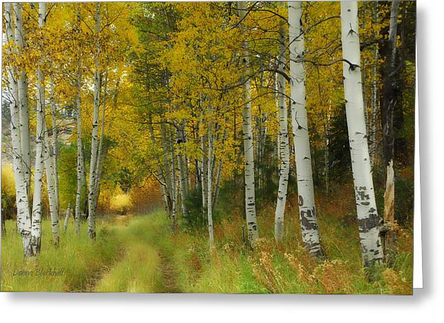 Birch Tree Greeting Cards - Follow The Light Greeting Card by Donna Blackhall