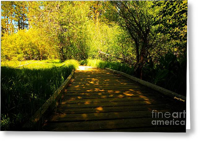 Follow The Path Greeting Card by Cheryl Young