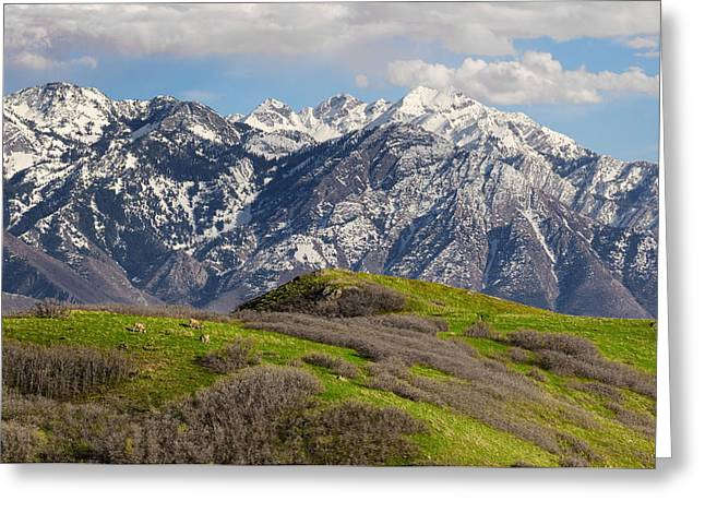 Metropolitan Greeting Cards - Foothills Above Salt Lake City Greeting Card by Utah Images