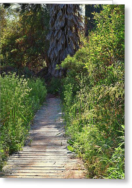 Pond In Park Greeting Cards - Footpath in Peters Canyon I Greeting Card by Linda Brody