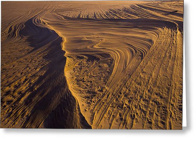Oregon Dunes National Recreation Area Greeting Cards - Footprint of the Wind Greeting Card by Robert Potts
