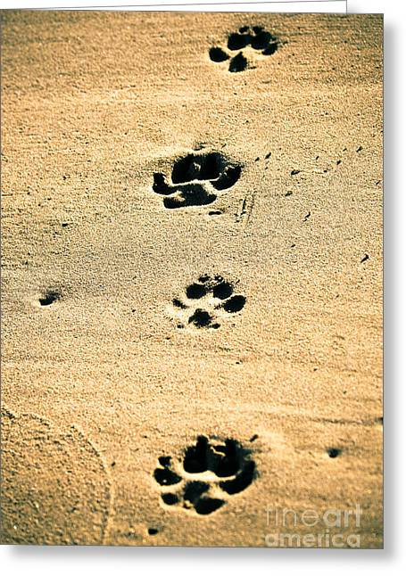 Doggies Greeting Cards - Footprints on the sand Greeting Card by Marc SOLER MARCE