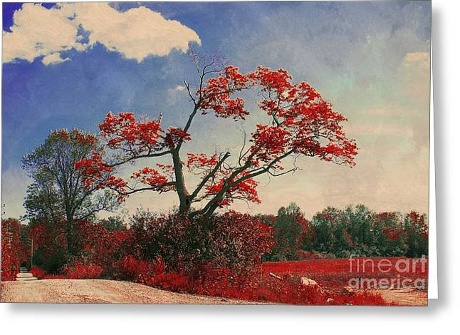 Tree Wall Art Greeting Cards - For a Moment - a23b Greeting Card by Variance Collections