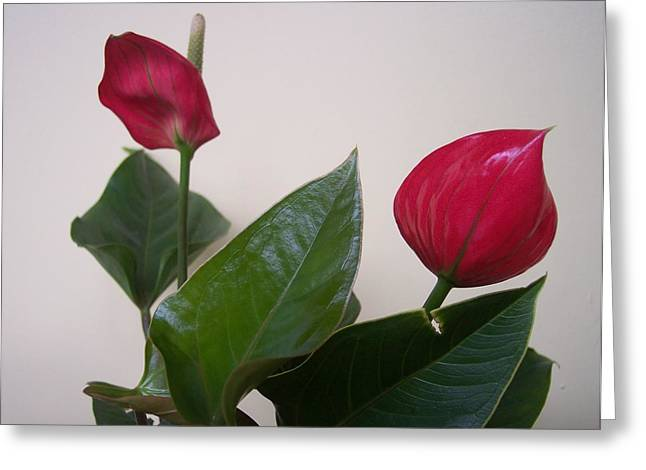 Anna Villarreal Garbis Greeting Cards - For Danielle Greeting Card by Anna Villarreal Garbis