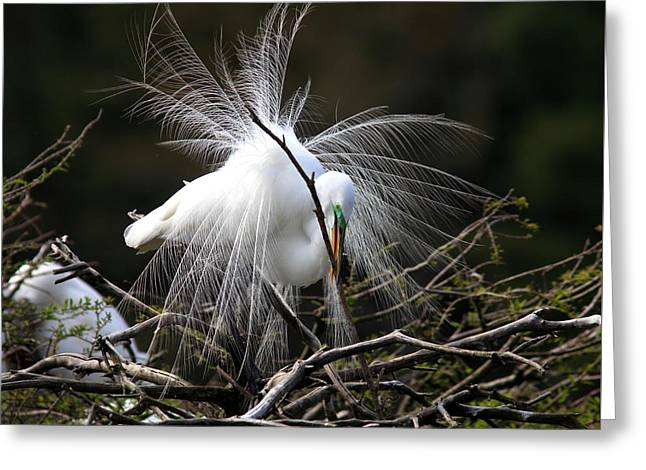 Wadingbird Greeting Cards - For the Nest Greeting Card by Mary Ellen Urbanski