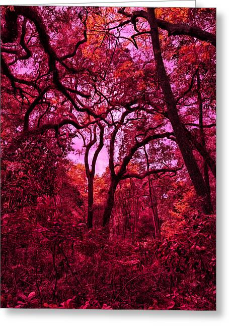 Moss Greeting Cards - Forest Abstract Greeting Card by John Bailey