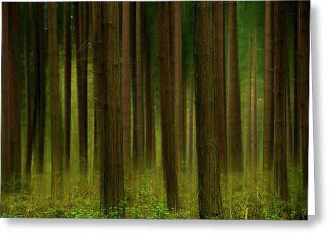 Fantasy Tree Art Greeting Cards - Forest Abstract01 Greeting Card by Svetlana Sewell