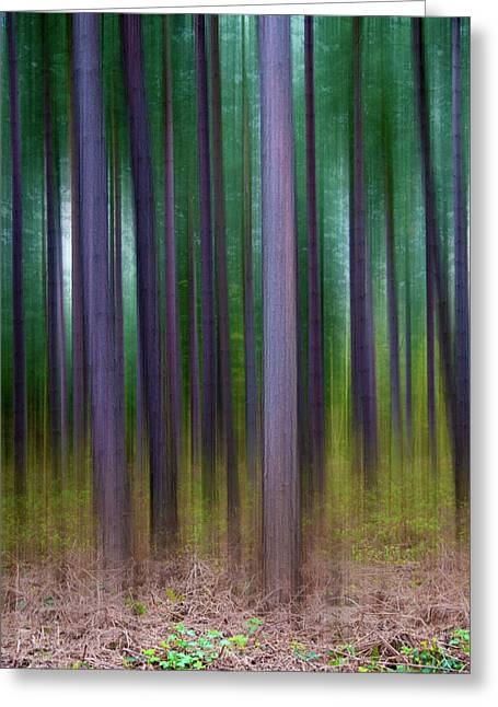 Fantasy Tree Art Greeting Cards - Forest Abstract02 Greeting Card by Svetlana Sewell