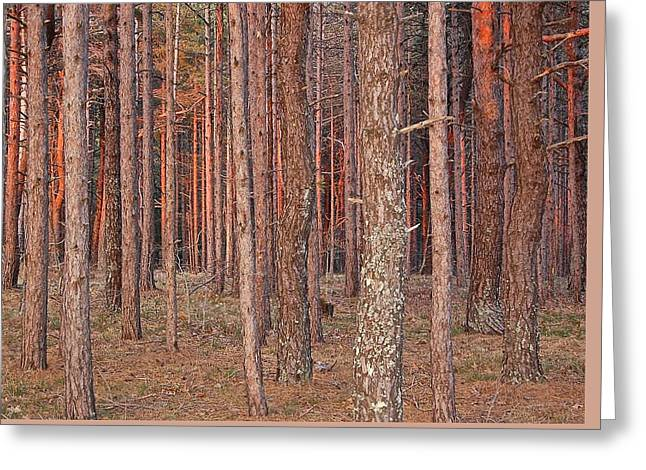 Just Driving By Greeting Cards - Forest at Dusk Greeting Card by Debbie Auclair