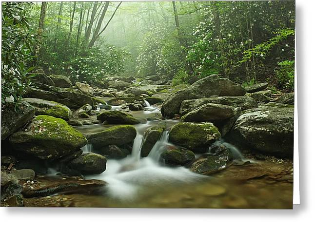 North Carolina Mountains Greeting Cards - Forest Blessing Greeting Card by Keith Clontz